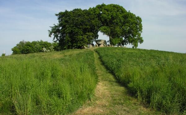 Ørnehøj-dyssen på friareal med store egetræer. Her set fra vest.