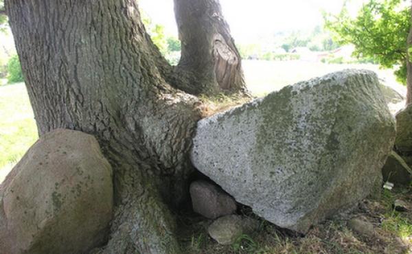 En randsten syd for kammeret samt et stort afkløvet stykke fra dækstenen er overvokset af egetræet.