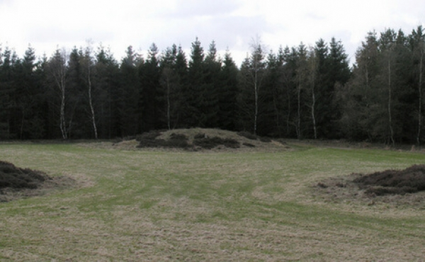 """""""Mangehøje""""-gravpladsen i Ågeslund Plantage lige nord for Grindsted er et sjældent flot eksempel på et sammenhængende gravfelt fra den såkaldte Enkeltgravskultur i afslutningen af bondestenalderen."""