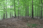 11:Her en typisk bronzealderhøj fra skoven.