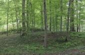 12:Panorama over småhøje i skoven lige syd for den store gravhøj på Samlingspladsen.
