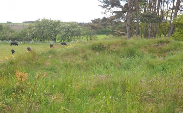 8: Højens top er afgravet i gammel tid, men der er sikkert stadig flere grave i højen.