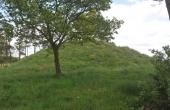 6: Bronzealdergravhøjen set fra vest. Nu fra hegnet og med fint græsdække.