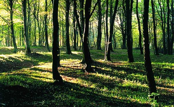10: Terrassekanter fra jernalderens marker i Alstrup Krat. Måske de tydeligste og bedst bevarede af sin slags i Danmark.