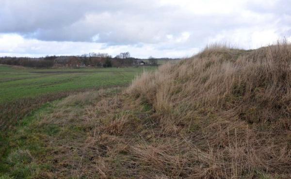 5: Vestlige højfod af den afgravede høj set fra syd.