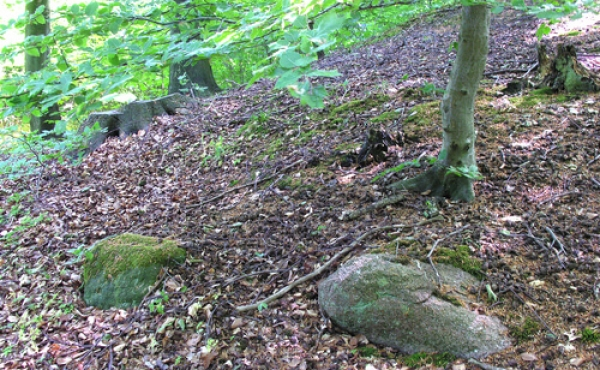 5: Store randsten langs højfoden omslutter de gamle gravhøje.