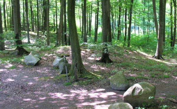 6: En af de lavere og lidt yngre gravhøje i skoven som sikkert blev anlagt i yngre bronzealder.