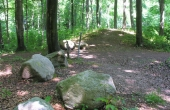 3: Gravhøjene ligger jævnt spredt på en naturlig forhøjning gennem skoven.