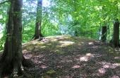 4: De fleste gravhøje er meget velbevarede i kraft af deres beliggenhed i skov.