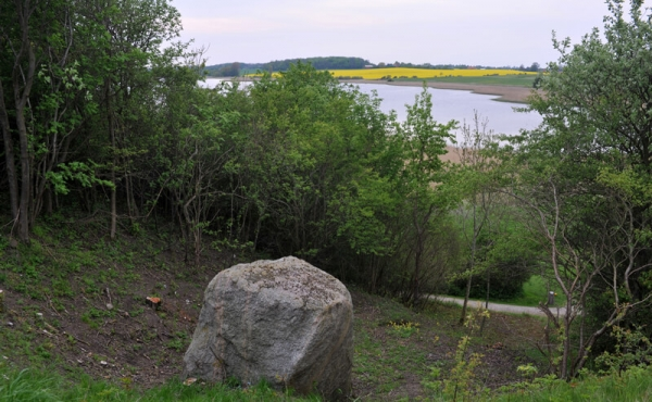 5: Stenen blev transporteret til Danmark med isen under den seneste istid og efterladt da isen smeltede.
