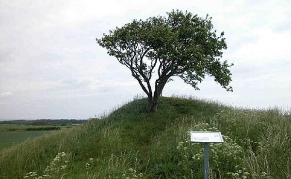1: Den afgravede Markskel Høj i agerskellet set fra vest.