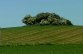 1: Målerhøj - en 3.500 år gammel gravhøj anlagt på top af bakken. Her set fra sydvest.