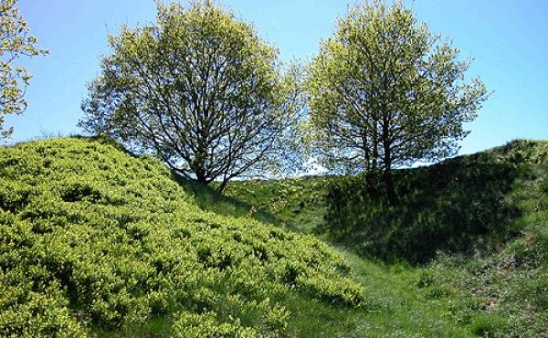 7: Gammel afgravning af Møgelhøj set fra nordvest.