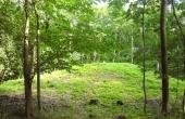 8: Den vestlige gravhøj set fra skovvejen.