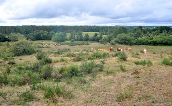 4: Oversigt over det åbne indhegnede areal hvor især gyvelbuske let kommer til at dominere.