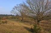 6: Enkeltstående egetræer giver landskabet karakter.