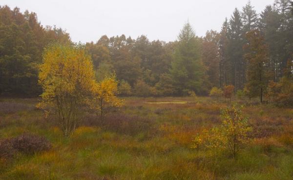 9: Smukt fugtigt område - et fattigkær - ud til Hærvejs- stien i den nordre del af Stenholt Krat.