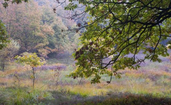 10: I efteråret byder skovens mange farver også på en fin oplevelse af Stenholt Krat.
