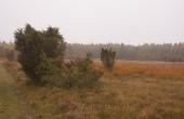 8: Nord for Stenholt Krat ligger et flot hede-område. Sådan så landskabet for størstedelen ud i middelalderen.