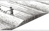 11: Pløjeprincippet ved kultivering af højryggede agre (Tegn. Jens Bech)
