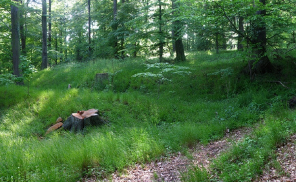 12: Nutidens skovvej i Storke- skoven skærer gamle hulveje.