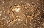 Skelettet i en af de to velbevarede hundegrave på Nederst-bopladsen. (Foto DJM)