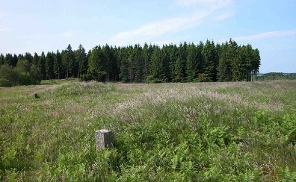 Oversigt over det fredede område med jernaldermarkerne set fra sydøst.