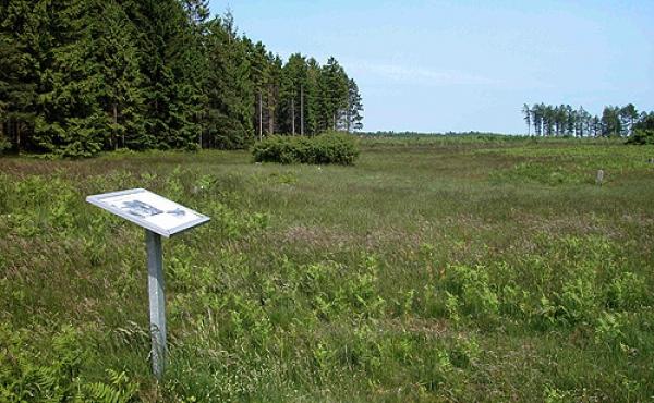 Informationsskiltet i nordvestenden af det fredede areal med jernaldersmarkerne.