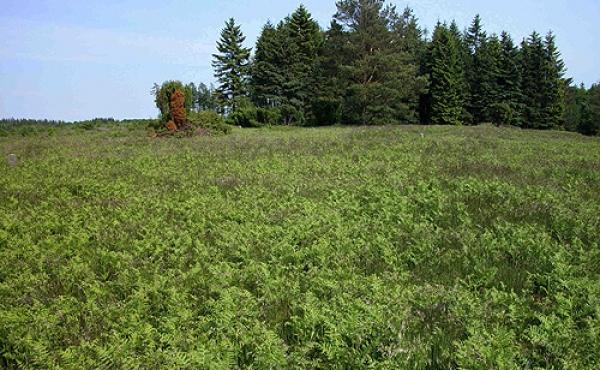 Nutidens græs- og lyngbevoksning er især koncentreret til skelvoldene. I billedets højre side går en lav skelvold mod sydøst.