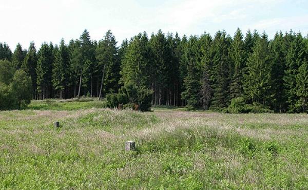 To rydningsrøser i nordvest-enden af markarealet set fra sydøst.