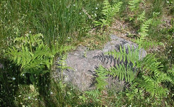 Rydningsrøserne indeholder afrømmede sten fra markerne, men kan også indeholde begravelser og daterende oldsager.