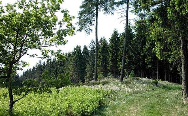 Den tydelige gravhøj nordvest for markerne.