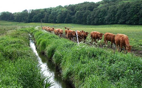 3: Den nu stærkt regulerede Illerup Å afvander stadig mosen.