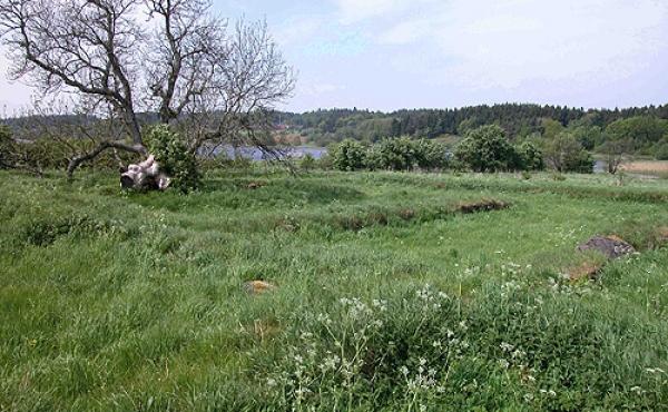 Klostertomten set fra sydøst. Græstørvsvoldene markerer klosterets mure.