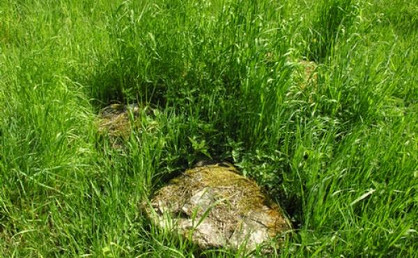 I græsset ses stadig enkelte sten fra kirkens fundament.