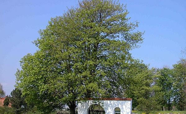 Den hvidkalkede indgangsportal i sydøst-hjørnet og stendiget omkring stedet er de sidste rester fra middelalderens kirke ved Essenbæk.