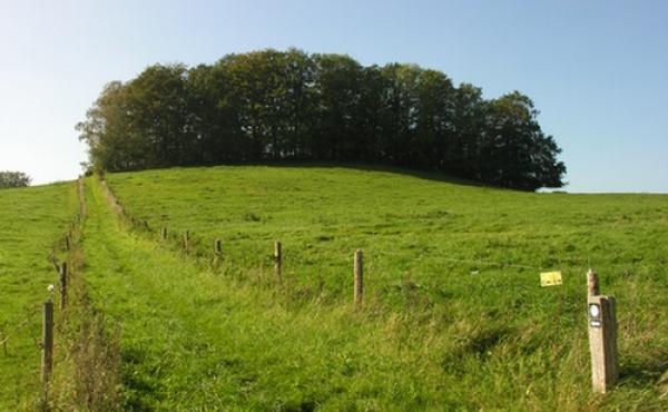 Voldanlægget ligger i skoven på toppen af bakken.