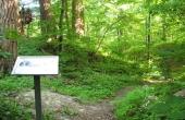 Hunesø Voldsted ligger godt skjult af de store træer, men banken ses stadig. Et informationsskilt fortæller mere om stedet.