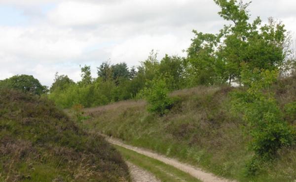 Hærvejssporet nord for Kong Knaps Dige set fra syd.