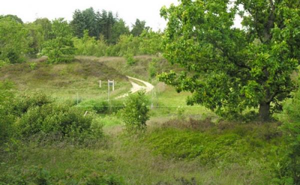 I egekrattet syd for åen ses adskillige fredede hulvejsspor som leder mod den gamle overgang over åen.