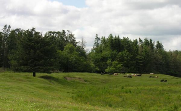 Vestdelen af Kong Knaps dige ligger i græsgangen syd for åen, vest for Hærvejen.