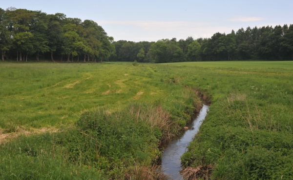 Stensby Møllebæk forsynede i middelalderen og nyere tid op til fem vandmøller med vand i vinterhalvåret.