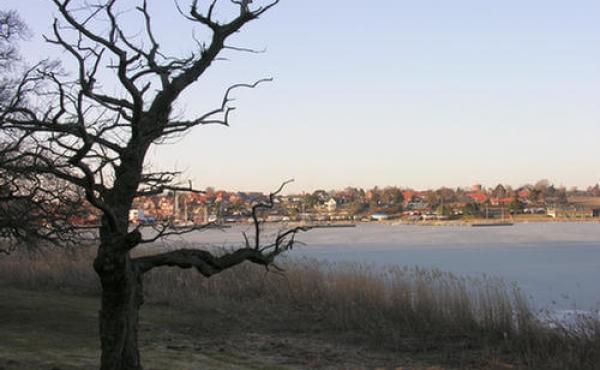 Bunden af vigen set mod nordvest fra Oringe-halvøen.