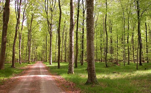 2: Meilgård Nederskov en forårs-dag i 2002.