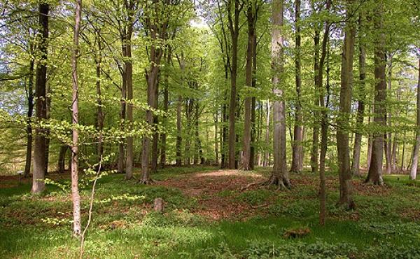 3: Køkkenmøddingen i Meilgård Nederskov set fra skovvejen.