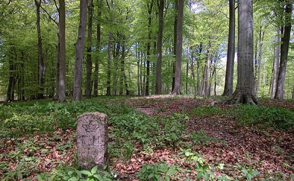 5: Fredningssten på sydenden af Meilgård-køkkenmøddingen.