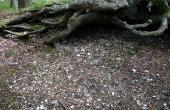 8: På bar jord ses køkkenmød-dingens indhold af især østers-skaller og menneskeforarbejdet flint tydeligt.