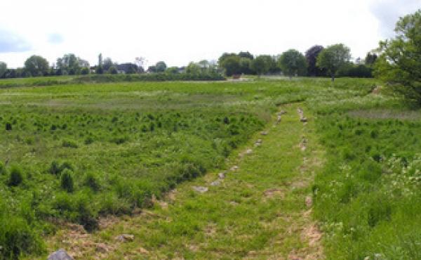 10: Panorama over den fredede vikingetidsvej i engen set fra øst.