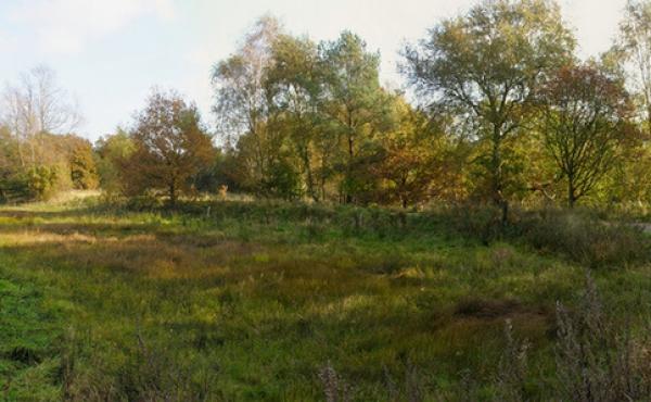 Kanalen ved Fladbro - set fra nordvest. Det 300 m. lange kanal-stykke fortsætter ind i skoven mod vest.