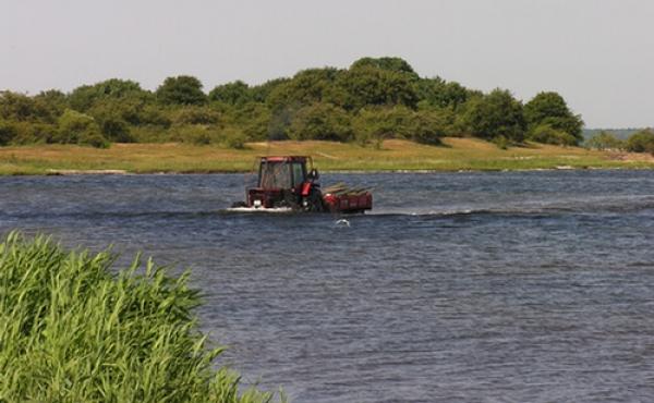 Maderne- den lille ø vest for skansen benyttes til græsning for ungkreaturer under godset Nysø og en traktor kan ved lavvande køre til og fra øen.